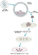 Cell pereparation